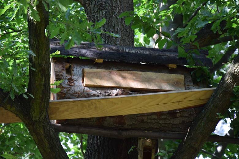 Barć na Jurze. Bo pszczoły to miód, ale i apiterapia