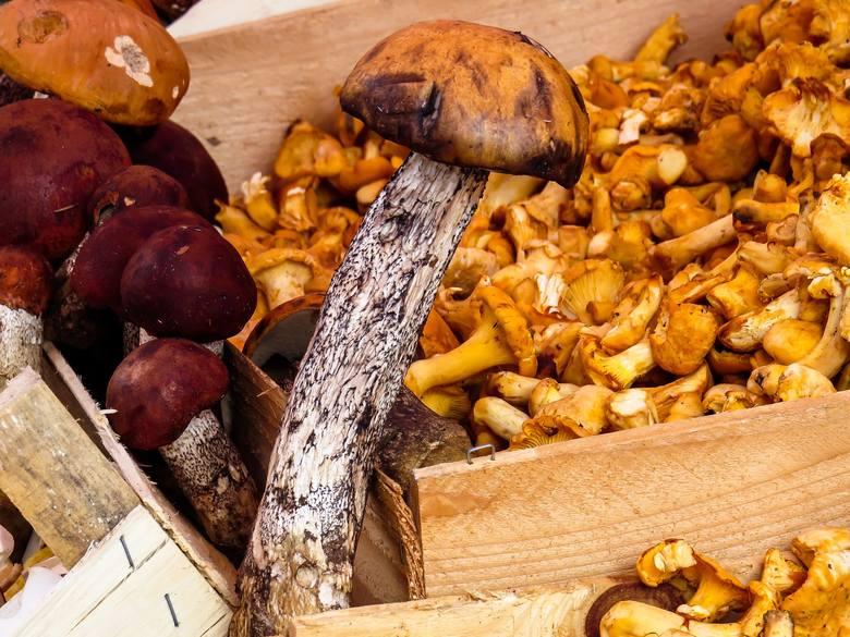 Pierwszą czynnością przygotowującą grzyby do spożycia lub dalszego  przetworzenia jest posegregowanie ich na poszczególne, zebrane gatunki.