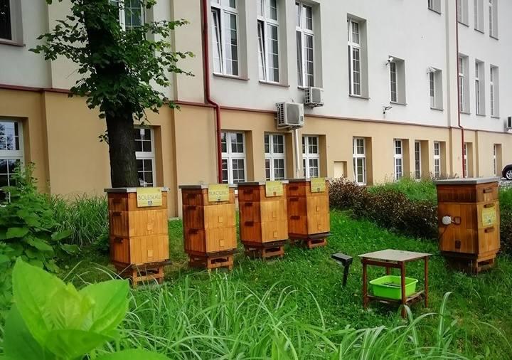"""W ramach tegorocznej akcji """"Zostań bartnikiem, ratuj pszczoły!"""" do mieszkańców powiatu olkuskiego trafi 100 uli z pszczołami."""