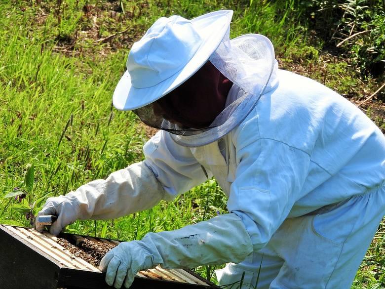 Choroba jest niezwykle zaraźliwa i błyskawicznie się rozprzestrzenia na sąsiadujące z zakażoną pasieką ule.