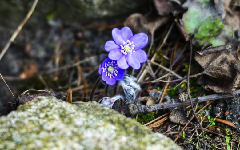 W tym tygodniu nareszcie odczujemy przyjście prawdziwej wiosny. Będzie ciepło i słonecznie. Takich temperatur jeszcze w tym roku nie było!>>