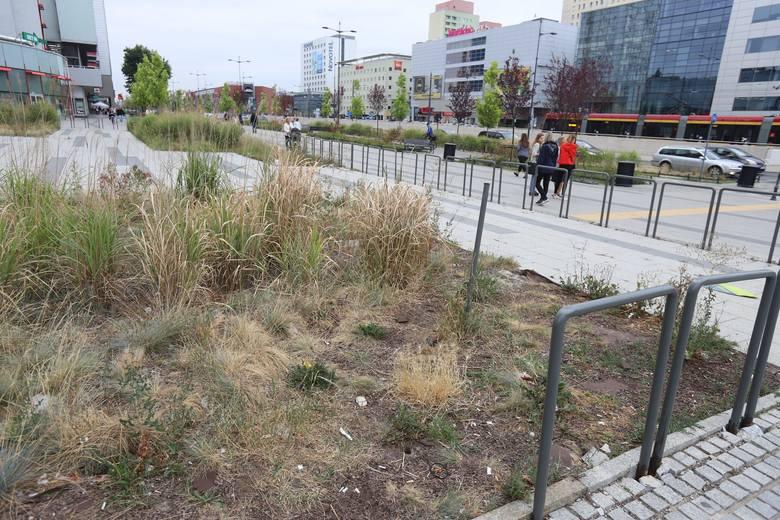 Tymczasem atrakcyjna działka przy głównej ulicy Łodzi stoi pusta i wygląda coraz gorzej. Jeszcze rok temu były tam zielone trawy ozdobne i zadbane rabaty