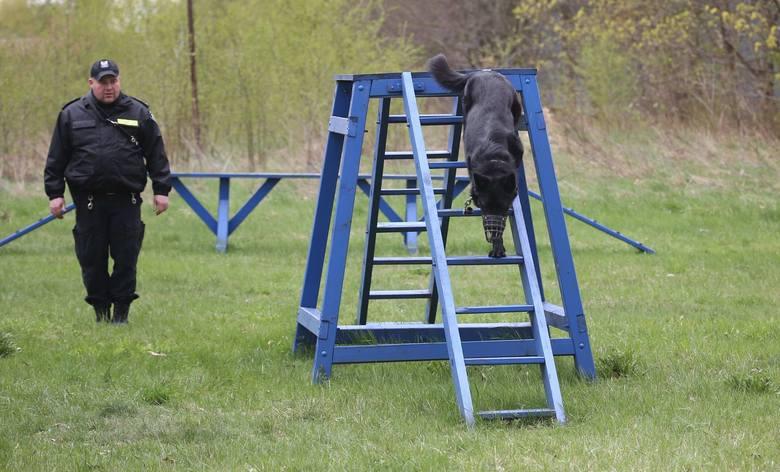Policyjne psy na egzaminie