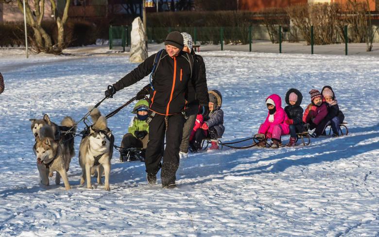 Grupę Husky-Team tworzy pięć osób i dwanaście psów
