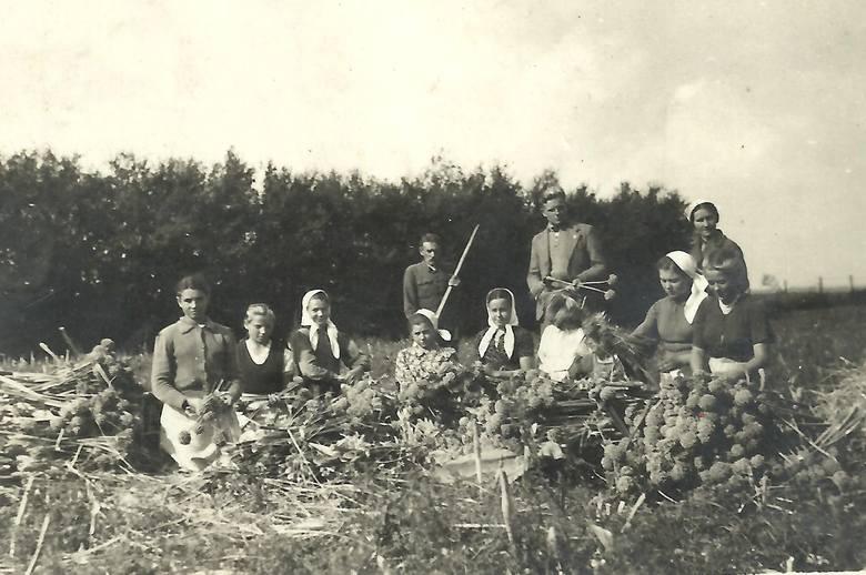 Rodzina Boberów z sąsiadami przy łuskaniu maku. W środku dziadek Danuty Berlińskiej – Felicjan (z grabiami w rękach), trzecia z lewej jego żona – Antonina z Dawidowiczów, Wołyń-Antonówka, lata 30. XX wieku.<br />