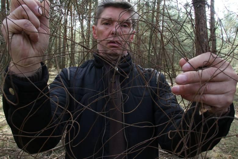 """Wiesław Janus, sołtys Skorzeszyc  pokazuje linkę w którą """"wbił się"""" motocyklista"""