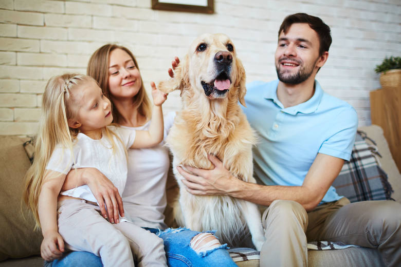 Psy z włosami nie linieją? To dość potoczne myślenie, bo w rzeczywistości niemal wszystkie psy mają sierść. Nie wszystkie jednak gubią ją w tym samym