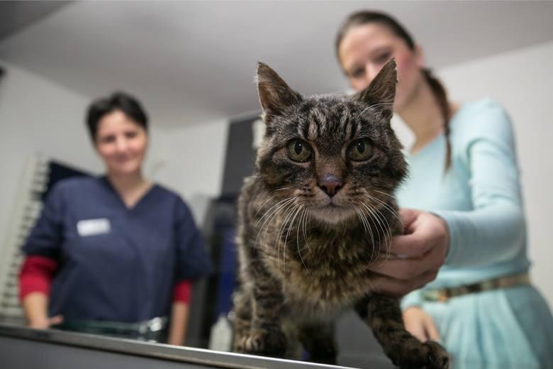 Weterynarze w całej Polsce mają być w gotowości i przygotować się do badania zwierząt na obecność koronawirusa. Chodzi przede wszystkim o psy, koty i