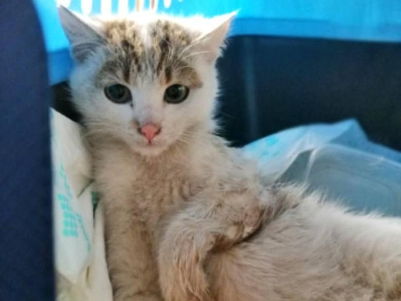 Poszkodowany kotek z Bogacicy potrzebuje pomocy.