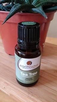 olejek z drzewa herbacianego, olejek