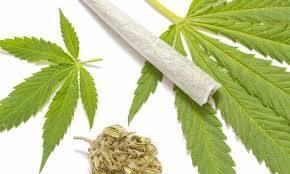 Syn z ojcem uprawiali marihuanę w Libertowie. Mają proces