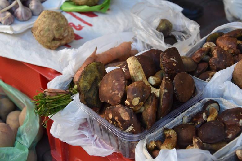 Na tarnowsku Burku również nie brakuje grzybów