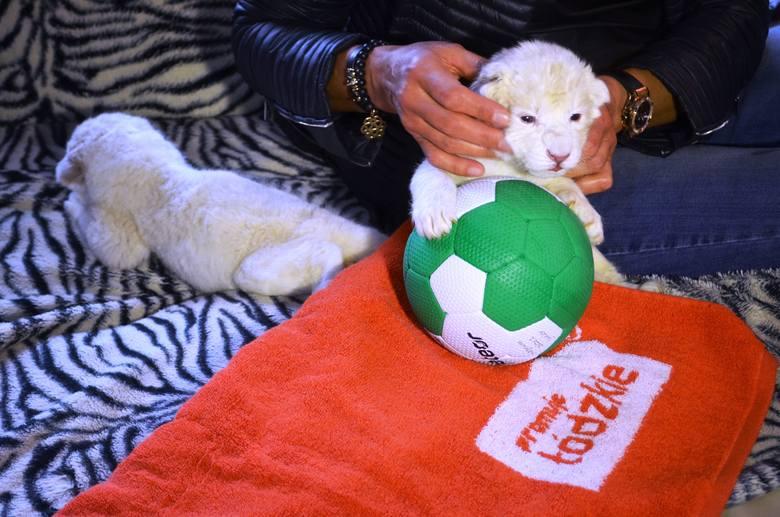 W Zoo Safari w Borysewie przyszły na świat dwa białe lwiątka [ZDJĘCIA]