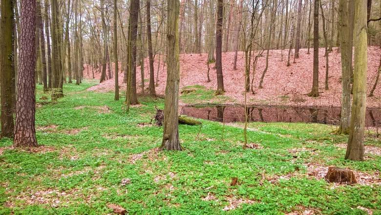 Do zabytku docieramy pieszo lub rowerem alejkami urzekającego Parku Słowiańskiego, chronionego prawnie jako zespół przyrodniczo-krajobrazowy