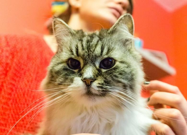Magda Chodorowska z kocią terapeutką Fioną.