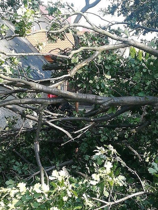 W środę na drogę w Żurawicy pod Przemyślem runęło drzewo. Dąb stał na terenie jednostki wojskowej - 1. Batalionu Czołgów. Do zdarzenia zadysponowano