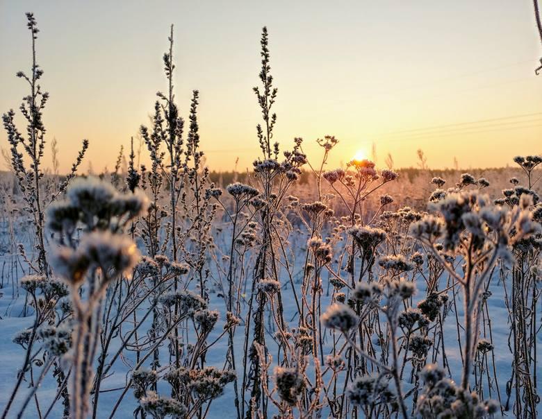 Po mroźnej nocy, złoty wschód słońca na łąkach Puszczy Knyszyńskiej w okolicach Królowego Mostu.