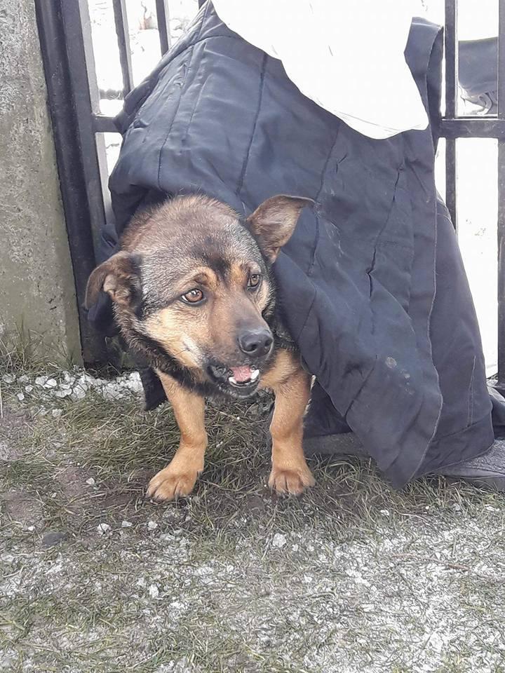 Do przykrego zdarzenia doszło na początku lutego. Gucio biegając po okolicy nadział się na ogrodzenie przy jednej z posesji. Jej właściciele zareagowali