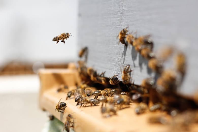 Ule - zapewnij pszczołom przyjazne warunki