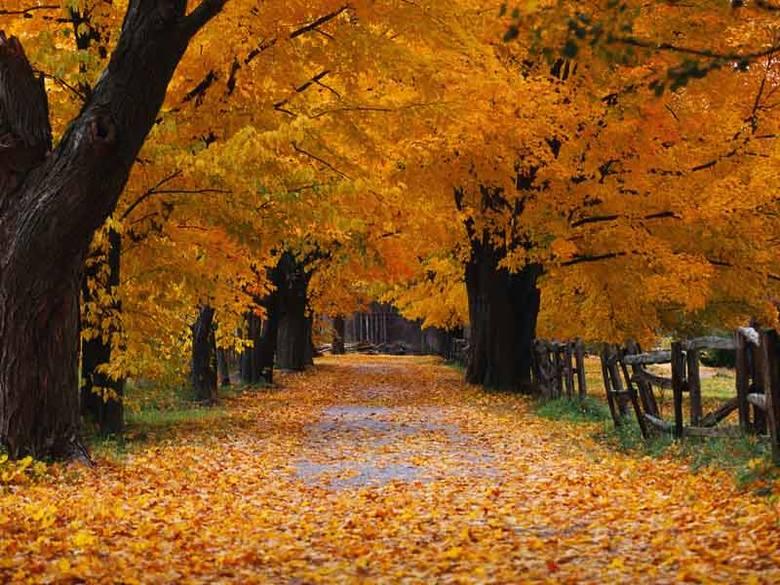 Kto by pomyślał, że obraz idyllicznej ścieżki obsypanej jesiennymi liśćmi może działać motywująco na zasiadającego przed monitorem użytkownika? Kojąca