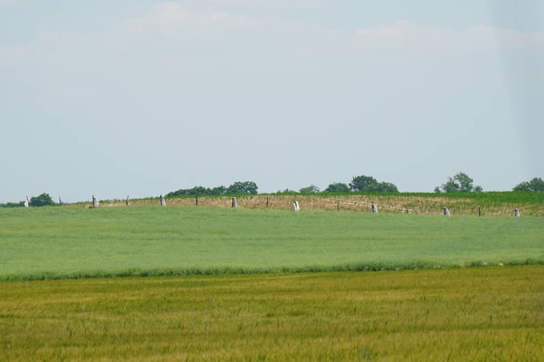Na polu, gdzie maszt na powstać często żerują żurawie, to też stałe miejsce lotów bielika.