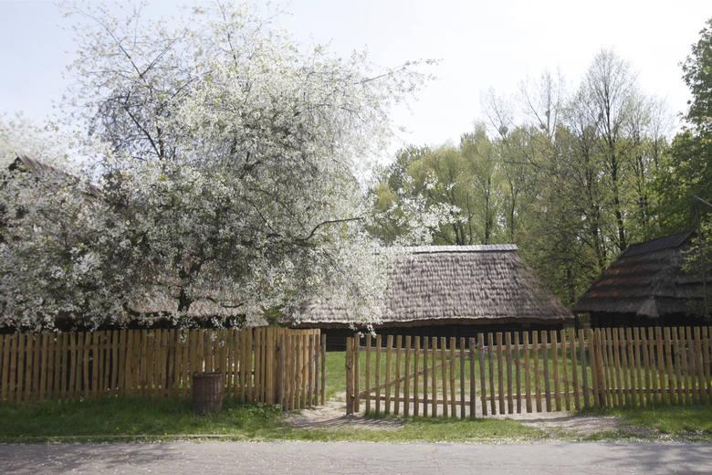 Park Śląsk w Katowicach kojarzy się z licznymi atrakcjami. Znajduje się tam Stadion Śląski, Legendia Śląskie Wesołe Miasteczko, Ślaski Ogród Zoologiczny