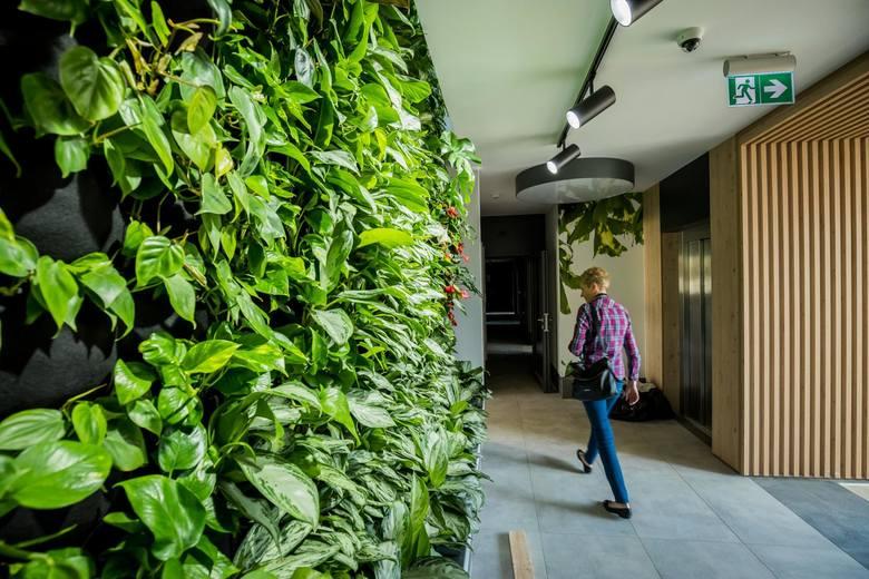 Zielona ściana w budynku mieszkalnym ma 15 metrów wysokości i 4 szerokości - jest największą taką konstrukcją w Polsce. Ponad 1000 roślin produkuje tyle tlenu, ile zużywa w ciągu dnia 30 osób.