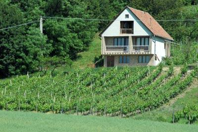 Kilkuarowa winnica na Słowacji