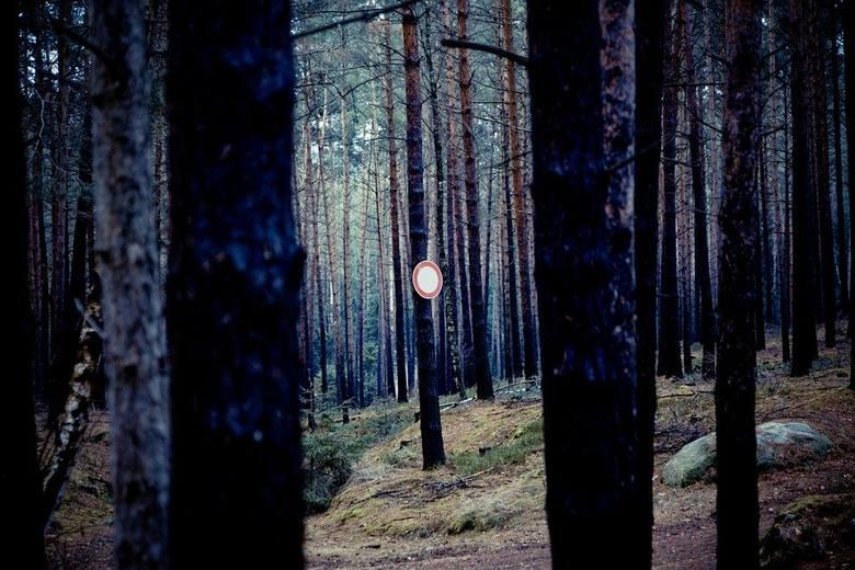 Koronawirus. Planowałeś niedzielny wypad do lasu? Uważaj, bo możesz dostać mandat!
