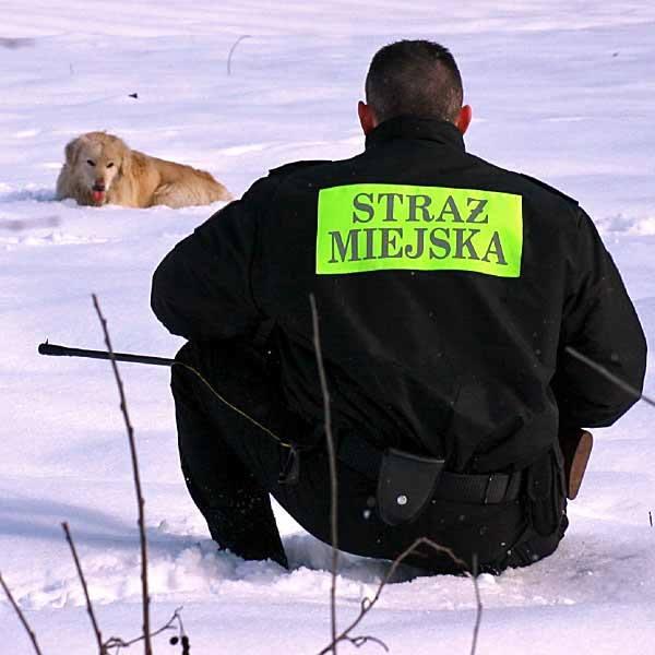 Pies podejrzany o wściekliznę złapany na obrzeżach Jarosławia
