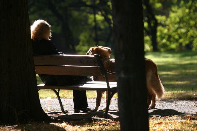Na spacer z psem trzeba chodzić z wiatrówką i drągiem (LIST)
