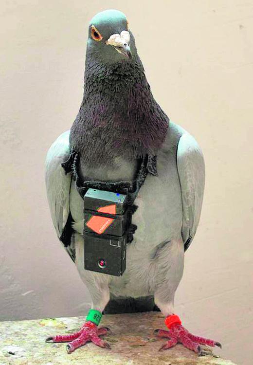 Gołębie nakręciły film o Krakowie, ale i tak podpadły, bo flirtują na głowie wieszcza
