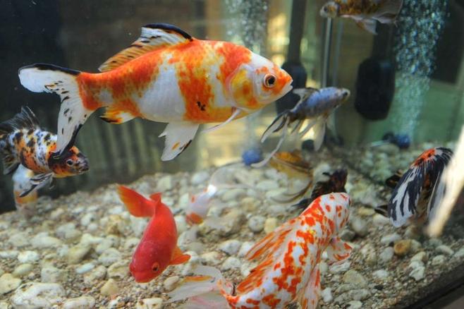 Znalezione obrazy dla zapytania rybki które są w palmiarni poznańskiej