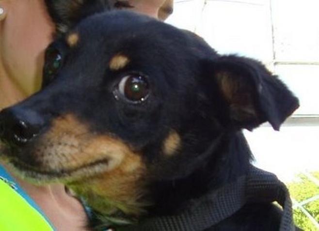 Pies wrócił do właściciela po 30-kilometrowej tułaczce.