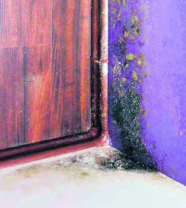 Mieszkańcy odsunęli szafy i odkryli na ścianie pleśń