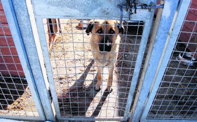 Schroniska są już przepełnione, a sensownych rozwiązań na bezdomność zwierząt brak