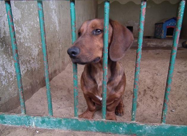 Poznań: Te psy czekają na Ciebie