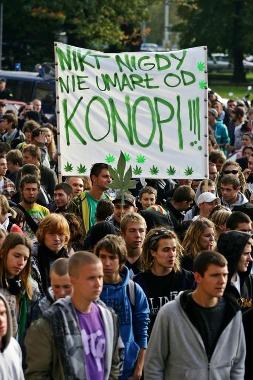 Marsz Wolnych Konopi, Wrocław