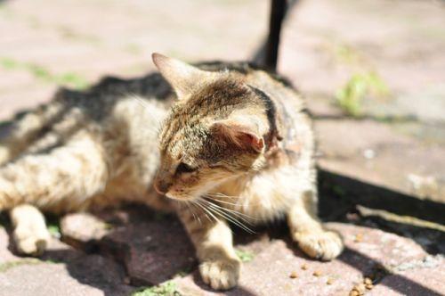 Ktoś oblał kota kwasem solnym? Zwierzak potrzebuje pomocy