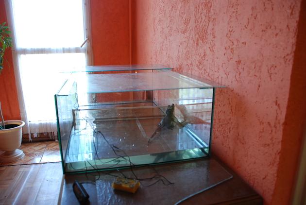 Słupsk: Hodował w domu krokodyla krótkopyskiego (ZDJĘCIA)