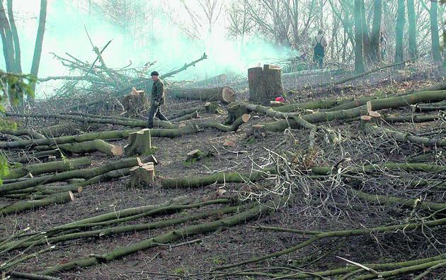 Sprawa wycinki drzew przy ulicy Bosmańskiej w Gdyni trafiła do prokuratury