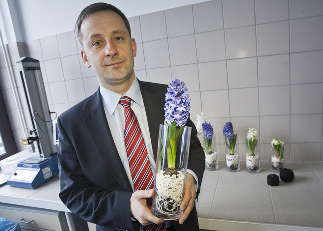 Dr Krzysztof Lejcuś prowadził badania m.in. na hiacyntach