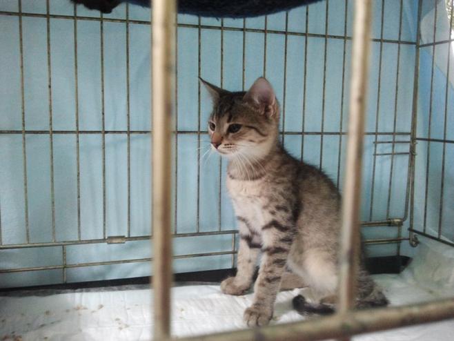 Koty i fretki w Palmiarni.