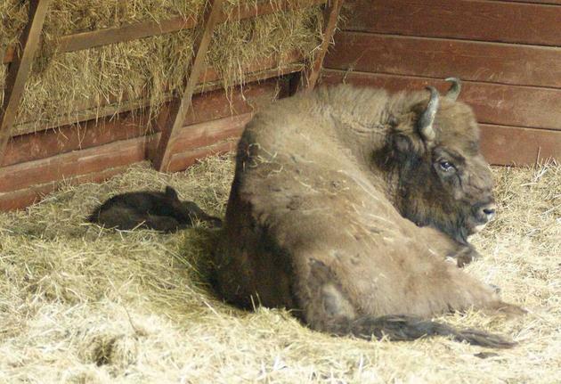 Maluch na razie cały czas śpi pod czujnym okiem matki