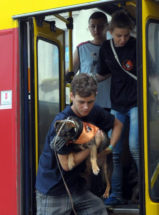 Adoptuj psa: Zobacz ZDJĘCIA i WIDEO z psiej parady