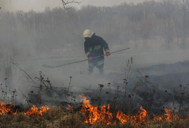 Zobacz, jak strażacy walczą z wypalaniem traw (ZOBACZ)