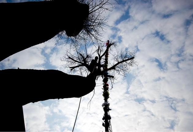 Niedziela palmowa: najwyższa palma w Lipnicy miała 36 metrów! [ZDJĘCIA, VIDEO]