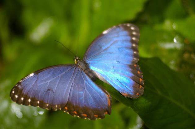 Łódź: dolina motyli (zdjęcia)