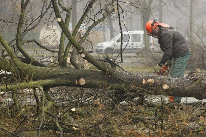 Wrocław, wycinka drzew, zdjęcie ilustracyjne