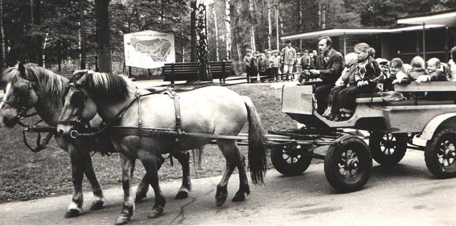 Kiedyś w Nowym Zoo można było przejechać się bryczką.